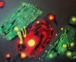 lucido-154-anno-2011-misura-60x80