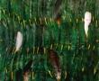 polli-di-renzo-misura-50x50-luglio-2011